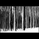 01.Zimske vertikale