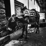 -04 Uredno parkiran,  Crna Trava, (1986)-800