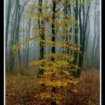 13.Jesen
