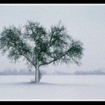 16.Sneg