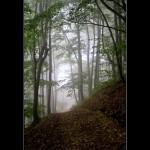 20. Vertikale u magli