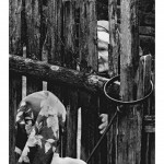 5- Kroz ogradu-1024