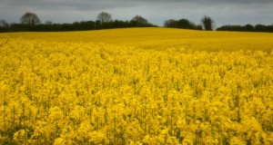 CKP_Landscape_Leinster028