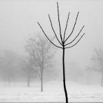Savovic Milenko - 04 - Slike u magli 1_resize
