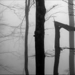 Savovic Milenko - 15 - Slike u magli 7_resize