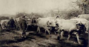 Краљ Петар у повлачењу код  јанкове  клисуре 9 новембра 1915 год.