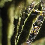 11 Život šume, 2012