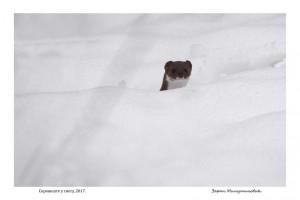 Skrovište u snegu