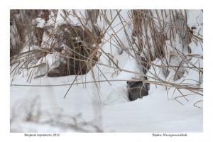 Otter Hide