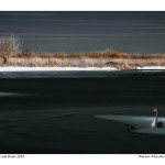 Icy Lake and Swan
