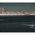 Icy Lake and Swan 1