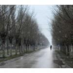 Violeta Milutinovic_30.Put