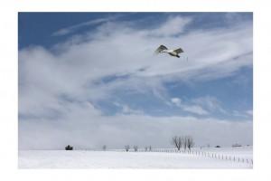 White Landscape 5