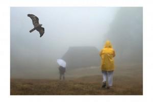 Foggy Morning 26
